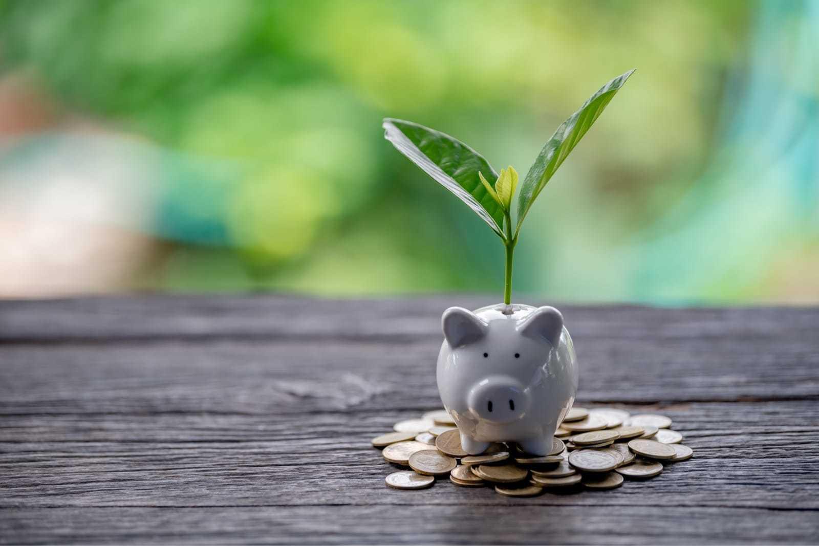 豚の貯金箱と、そこに生えた植物、お金