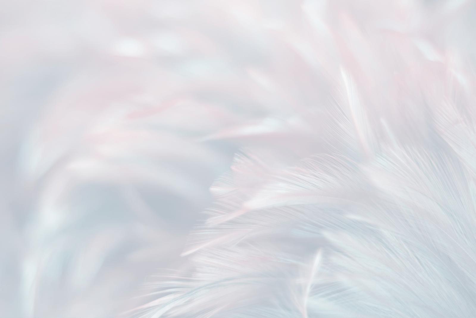 クローズアップされた鳥の羽